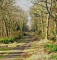 Staunton country park - geograph.org.uk - 416968.jpg