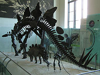 Stegosaurus Struct.jpg