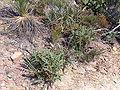 Stirling range np 12 gnangarra.jpg