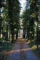 Strašnický hřbitov cesta 3.jpg