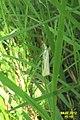 Straw grass-veneer (Hav) (7948771676).jpg
