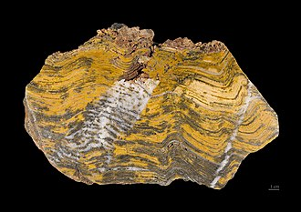 Paleoarchean - A stromatolite formed by Paleoarchean miocrobial mats, preserved as a fossil, from Pilbara craton, Western Australia