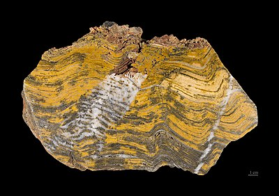 Stromatolite fossil estimated at 3.2-3.6 billion years old Stromatolithe Paleoarcheen - MNHT.PAL.2009.10.1.jpg