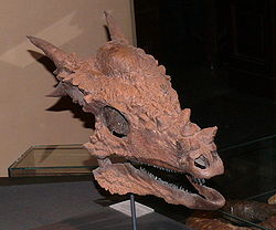 Stygimoloch spinifer.jpg