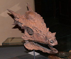 Stygimoloch spinifer