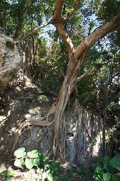 File:Sueyoshi Park Naha Okinawa Japan32s3.jpg