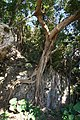 Sueyoshi Park Naha Okinawa Japan32s3.jpg