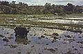 Sumatra1981-001.jpg
