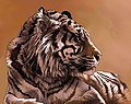 Sumatran Tiger (7799878282).jpg