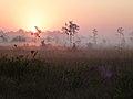 Sunrise (6226387010).jpg