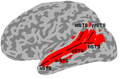 Superior temporal sulcus anatomy.png