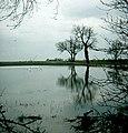 Sykehouse floods - geograph.org.uk - 939764.jpg