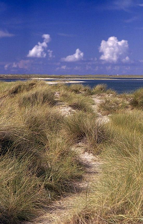 Sylt beach.jpg