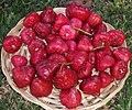 SyzygiumSamarangense-fruit2.jpg
