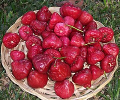 Jambu Jambuan Wikipedia Bahasa Indonesia Ensiklopedia Bebas