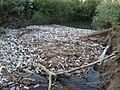 Szemét a Latorca folyón Csapnál.jpg