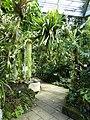 Tübingen — Neuer Botanischer Garten — Tropicarium.jpg