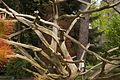TU Delft Botanical Gardens 10.jpg
