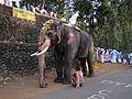 Taliparamba Sivasundaram(Elephant).jpg