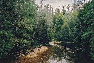 Styx River (Tasmania) - Logged trees in the Styx Valley, as seen from Rumbly Bridge over the Styx River.