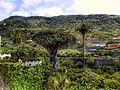 Tenerife 10 (6700359323).jpg