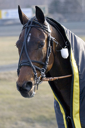 Overcheck - Head shot of an overcheck on a harness racing horse, with separate bit