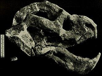 Endothiodon - Endothiodon and Emydops skulls