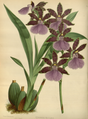 The Orchid Album-02-0009-0050.png