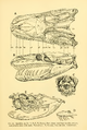 The Osteology of the Reptiles-091 ijuh.png