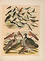 The birds of North America (PL. CXIV) (6022724562).jpg
