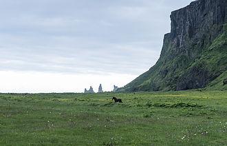 Vík í Mýrdal - The cliffs by the township of Vik in Iceland