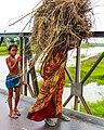 The lifecycle, Bangladesh.jpg