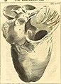 Theodori Kerckringii, Doctoris medici Opera omnia anatomica - continentia Specilegium anatomicum, Osteogeniam foetuum, nec non Anthropogeniae ichnographiam - accuratissimis figuris aeri incisis (14779270254).jpg