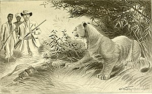 East African lion - An illustration of a lion being encountered by a group of people on an expedition from Somaliland to Lake Lamu