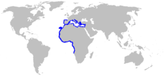 Range of the common torpedo[1]