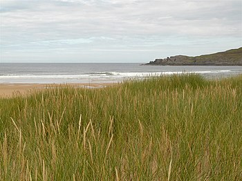 English: Torrisdale Bay The marram grass in th...