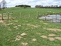 Towards Moatless Plantation on Calton Pastures - geograph.org.uk - 1237213.jpg