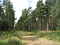 Track, Tentsmuir Forest - geograph.org.uk - 1456920.jpg