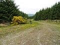 Track Junction, Howpasley Forest - geograph.org.uk - 467124.jpg
