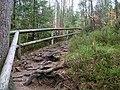 Trail at Silberteich 18.jpg