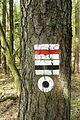 Trails, Dziewicza Gora (2).JPG