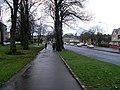Tree-lined pavement by Berryknowes Road - geograph.org.uk - 1188914.jpg