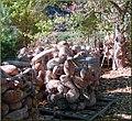 Tree Farm, Ghords 12-8-12d (8270316144).jpg