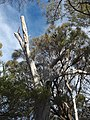 Tree Whalers Lookout Bicheno 201907025-012.jpg