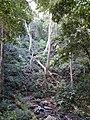 Treefall gap.jpg