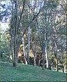 Trees, Yucaipa Reg Park 3-10-13 (8552674044).jpg