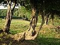 Trees near Stanton - geograph.org.uk - 243067.jpg