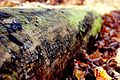 Trunk+leaves-DoF(byChloeBenko-Prieur).jpg