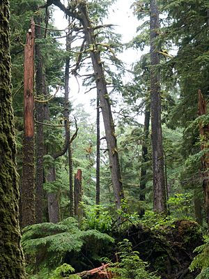 Haida Gwaii - Hemlock forest in Gwaii Hanaas National Park