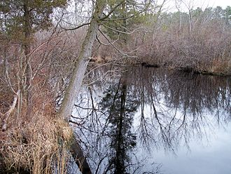 Tuckahoe River (New Jersey) - The Tuckahoe River in Belleplain State Forest in 2006